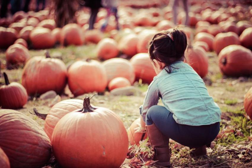 pumpkinpatch-9_zpsd1d2a47e